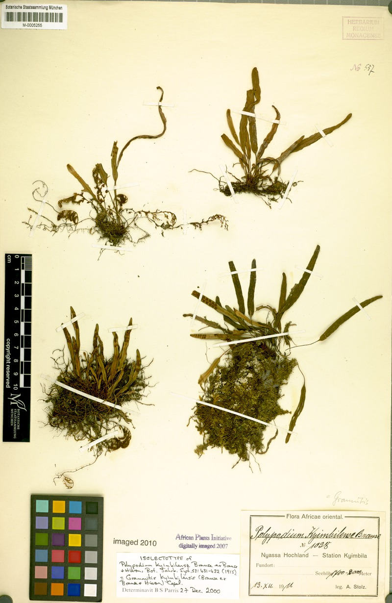 botanische staatssammlung muenchen